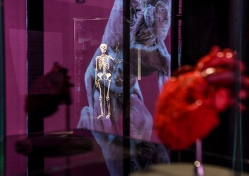 Body Worlds porto antico 022016-4441