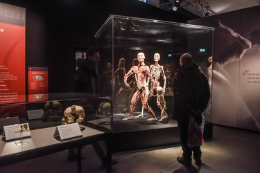 Body Worlds porto antico 022016-4456