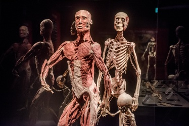 Body Worlds porto antico 022016-4462