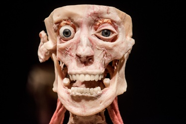Body Worlds porto antico 022016-4467