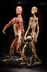 Body Worlds porto antico 022016-4469