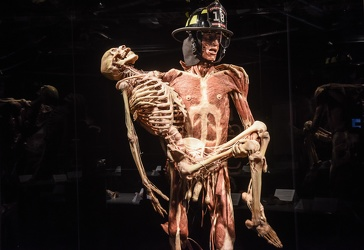 Body Worlds porto antico 022016-4499
