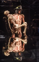 Body Worlds porto antico 022016-4506