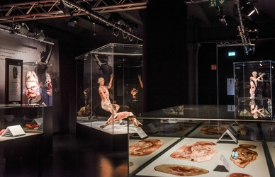 Body Worlds porto antico 022016-4509