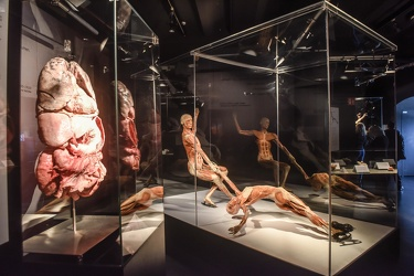Body Worlds porto antico 022016-4513