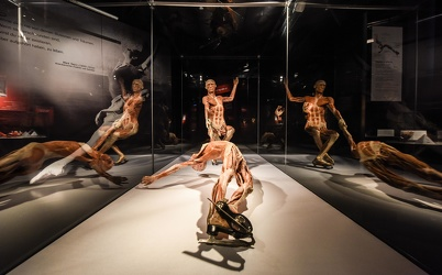 Body Worlds porto antico 022016-4514