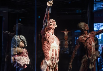 Body Worlds porto antico 022016-4553