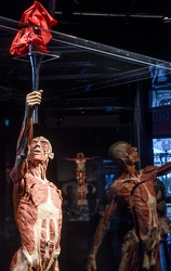 Body Worlds porto antico 022016-4554