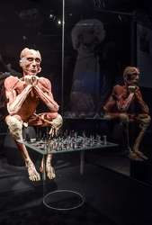 Body Worlds porto antico 022016-4560