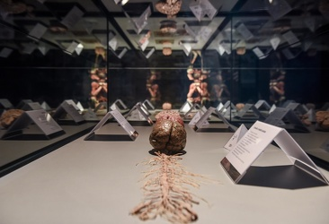 Body Worlds porto antico 022016-4572